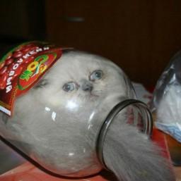 猫の液状化