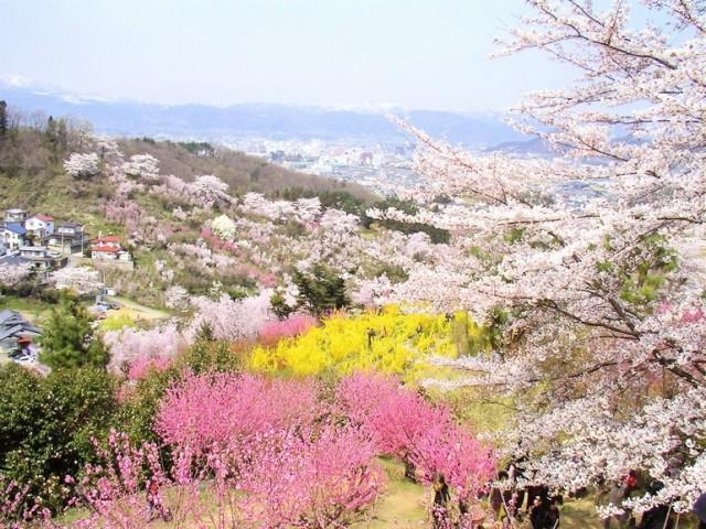 花見山公園_02